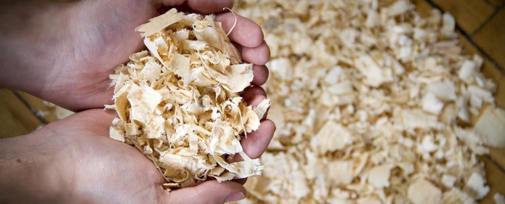 Bulk Wood Shavings – Premium Quality Bedding in Ontario
